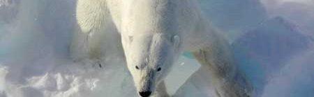 Hacia un planeta sin hielo ártico ni osos polares